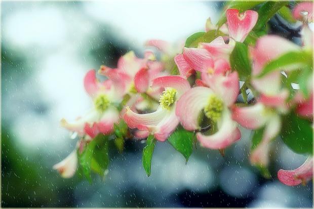 春雨 ..のコピー.png