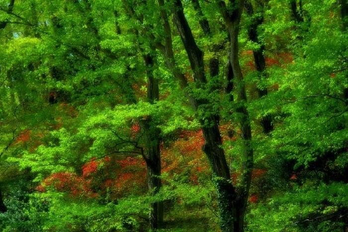癒しの森で (1) - コピー.JPG