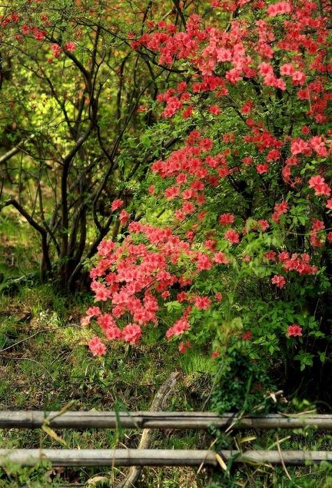 癒しの森で (4) - コピー.JPG