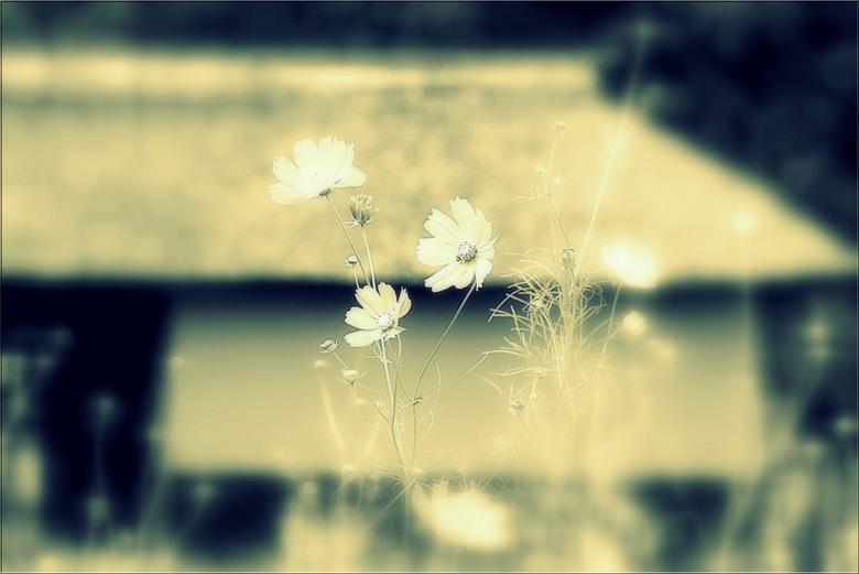 記憶…のコピー.jpg