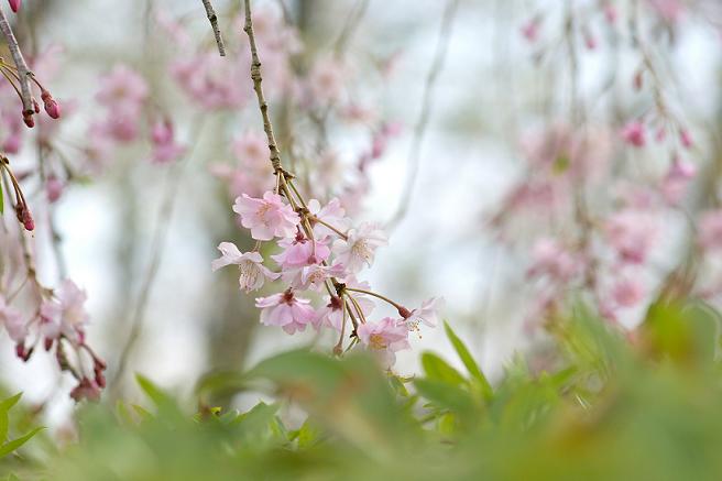静かな静かな春風景.png